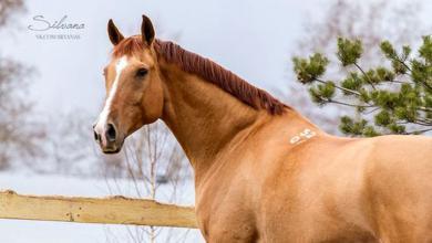 Kleine Pferde Bilder Für Whatsapp 390x220 - Kleine Pferde Bilder Für Whatsapp