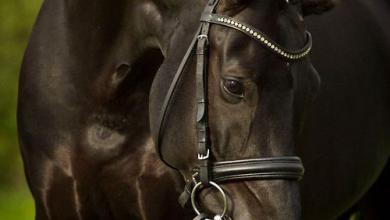 Kostenlose Pferde 390x220 - Kostenlose Pferde