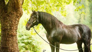 Kostenlose Pferde Bilder Für Whatsapp 390x220 - Kostenlose Pferde Bilder Für Whatsapp