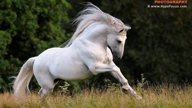 Kostenlose Pferde Für Whatsapp 390x220 - Kostenlose Pferde Für Whatsapp