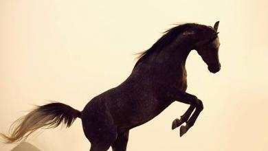 Kostenlose Pferde Kaufen Für Whatsapp 390x220 - Kostenlose Pferde Kaufen Für Whatsapp