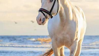 Kostenlose Pferde Kaufen Kostenlos Herunterladen 390x220 - Kostenlose Pferde Kaufen Kostenlos Herunterladen