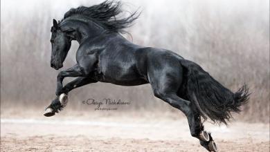 Kostenlose Pferde Kostenlos Downloaden 390x220 - Kostenlose Pferde Kostenlos Downloaden