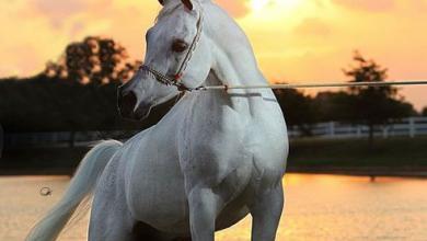 Krämer Pferde 390x220 - Krämer Pferde