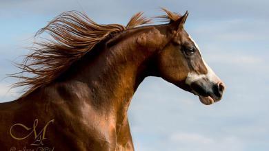 Krämer Pferde Für Facebook 390x220 - Krämer Pferde Für Facebook