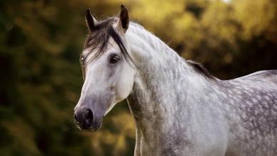 Lachende Pferde Bilder 390x220 - Lachende Pferde Bilder