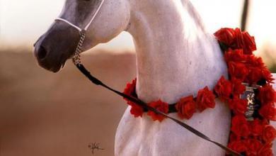 Lachende Pferde Bilder Für Facebook 390x220 - Lachende Pferde Bilder Für Facebook