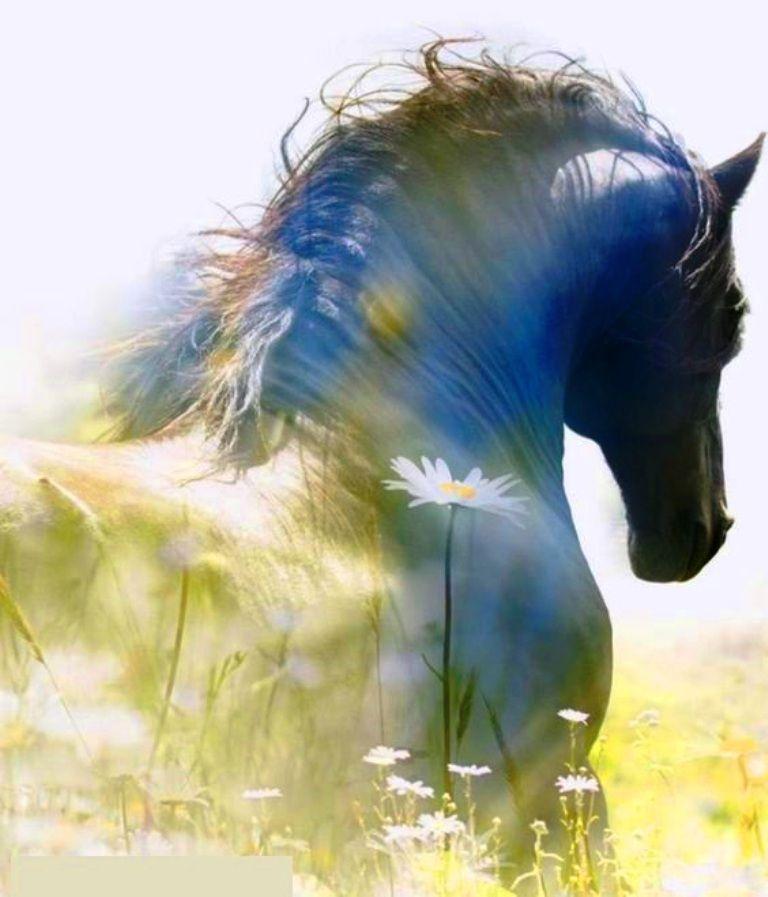 Lachendes Pferd Bild Für Facebook - Lachendes Pferd Bild Für Facebook
