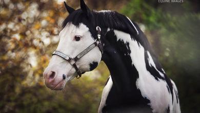 Lachendes Pferd Bild Kostenlos Herunterladen 390x220 - Lachendes Pferd Bild Kostenlos Herunterladen