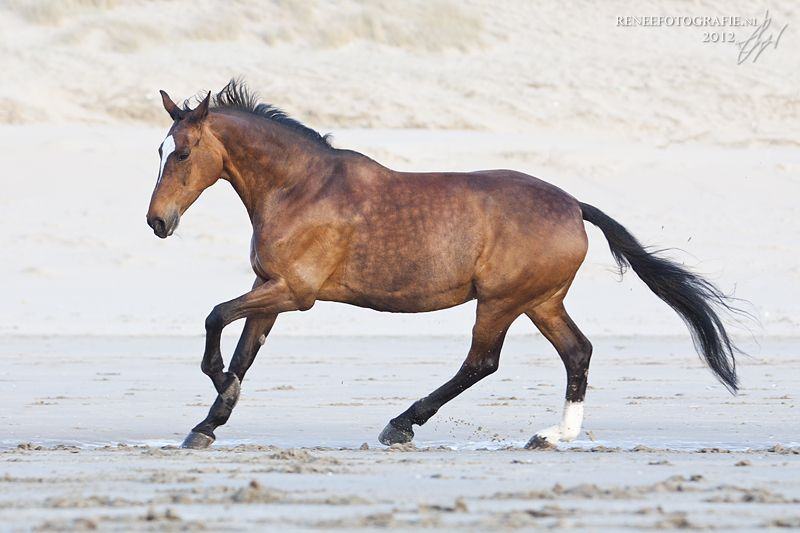 Lachendes Pferd Bild - Lachendes Pferd Bild