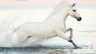 Lachendes Pferd Fotos 390x220 - Lachendes Pferd Fotos