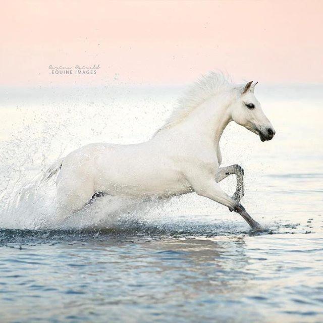 Lachendes Pferd Fotos - Lachendes Pferd Fotos