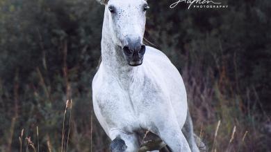 Leinwandbild Pferd Kostenlos Downloaden 390x220 - Leinwandbild Pferd Kostenlos Downloaden