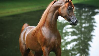 Lustige Bilder Pferde Kostenlos Herunterladen 390x220 - Lustige Bilder Pferde Kostenlos Herunterladen