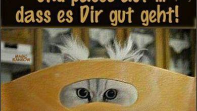 Lustige Guten Tag Sprüche 390x220 - Lustige Guten Tag Sprüche