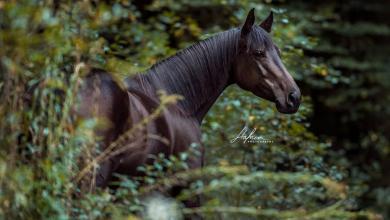 Malbilder Pferd 390x220 - Malbilder Pferd