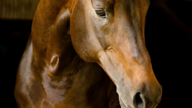 Malbilder Pferd Kostenlos Herunterladen 390x220 - Malbilder Pferd Kostenlos Herunterladen