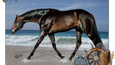 Malvorlagen Pferde Kostenlos Downloaden 390x220 - Malvorlagen Pferde Kostenlos Downloaden