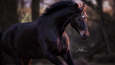 Mein Pferd Für Facebook 390x220 - Mein Pferd Für Facebook