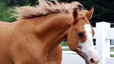 Mustang Bilder Pferd Kostenlos Herunterladen 390x220 - Mustang Bilder Pferd Kostenlos Herunterladen
