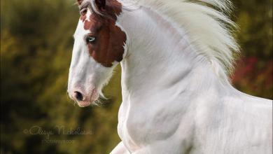 Mustang Pferd Kaufen 390x220 - Mustang Pferd Kaufen