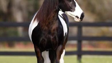 Mustang Pferde Bilder Kostenlos Herunterladen 390x220 - Mustang Pferde Bilder Kostenlos Herunterladen
