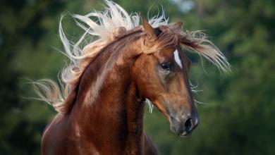 Nacht Der Pferde 390x220 - Nacht Der Pferde
