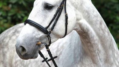 Ostwind Bilder Pferd Für Facebook 390x220 - Ostwind Bilder Pferd Für Facebook