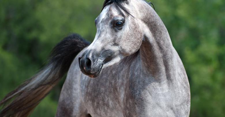 ostwind bilder pferd kostenlos herunterladen  bilder und