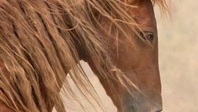 Percheron Pferde Bilder Für Whatsapp 390x220 - Percheron Pferde Bilder Für Whatsapp