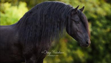 Pferd Gesucht Für Facebook 390x220 - Pferd Gesucht Für Facebook