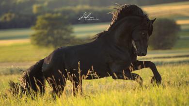 Pferd International Kostenlos Herunterladen 390x220 - Pferd International Kostenlos Herunterladen