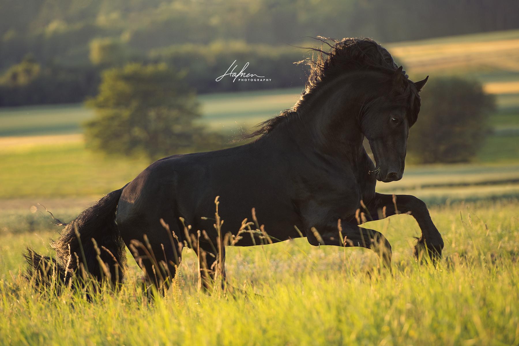 pferd international kostenlos herunterladen  bilder und