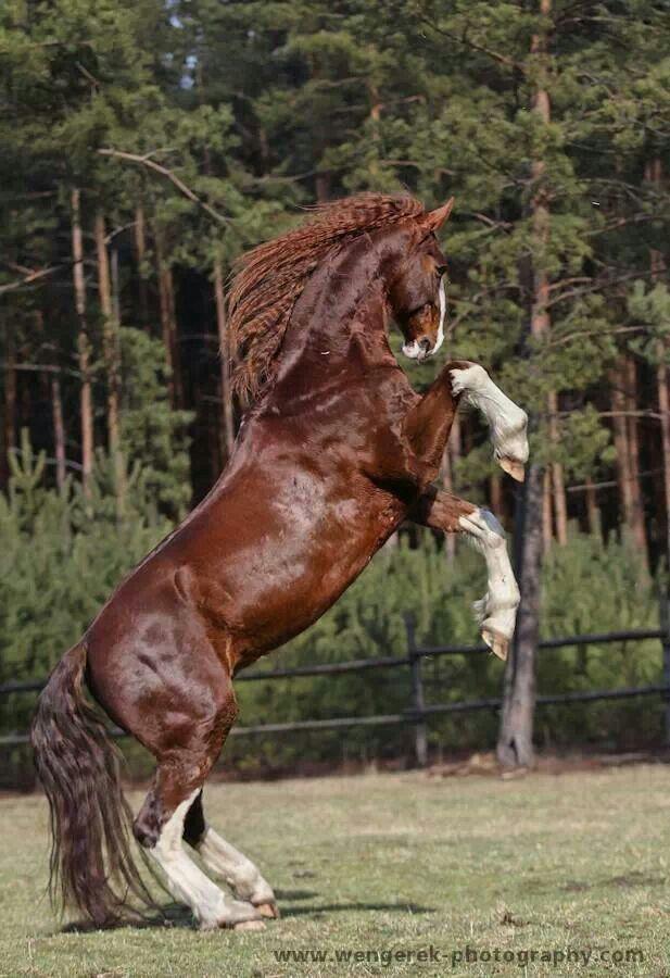 Pferd Kaufen Augsburg Kostenlos Herunterladen - Pferd Kaufen Augsburg Kostenlos Herunterladen