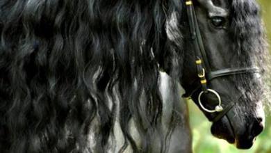 Pferd Kaufen Bonn Für Whatsapp 390x220 - Pferd Kaufen Bonn Für Whatsapp