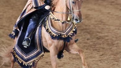Pferd Kaufen Heilbronn Für Facebook 390x220 - Pferd Kaufen Heilbronn Für Facebook