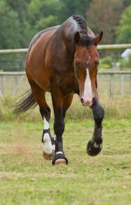 Pferd Kaufen Heilbronn Für Whatsapp 192x300 - Pferd Kaufen Heilbronn Für Whatsapp
