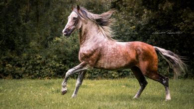 Pferd Kaufen Köln Kostenlos Herunterladen 390x220 - Pferd Kaufen Köln Kostenlos Herunterladen