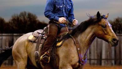 Pferd Kaufen Luxemburg Für Facebook 390x220 - Pferd Kaufen Luxemburg Für Facebook