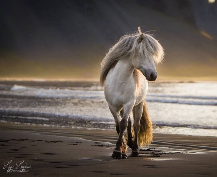 pferd kaufen niedersachsen für whatsapp  bilder und