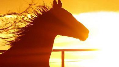 Pferd Kaufen Schweiz Für Facebook 390x220 - Pferd Kaufen Schweiz Für Facebook