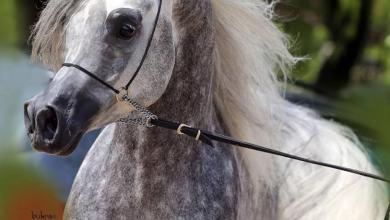 Pferd Pony Für Facebook 390x220 - Pferd Pony Für Facebook