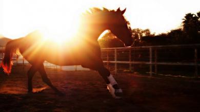 Pferd Pony Für Whatsapp 390x220 - Pferd Pony Für Whatsapp