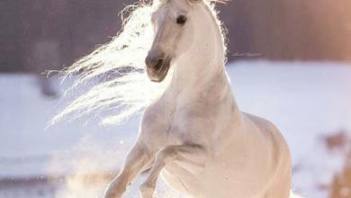 Pferd Pony Kostenlos Herunterladen 1 390x220 - Pferd & Pony Kostenlos Herunterladen