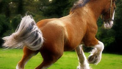 Pferd Pony Kostenlos Herunterladen 390x220 - Pferd Pony Kostenlos Herunterladen