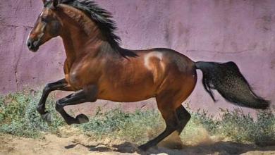 Pferd Reiten Kostenlos Downloaden 390x220 - Pferd Reiten Kostenlos Downloaden
