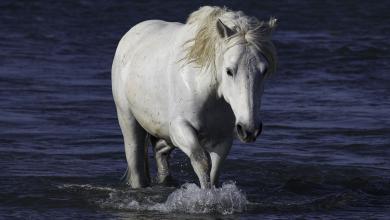 Pferd Und Pferd 390x220 - Pferd Und Pferd