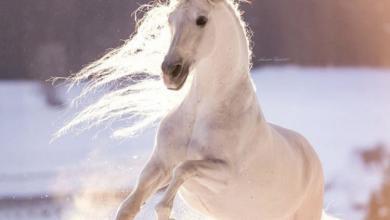 Pferd Zu Verkaufen Niedersachsen Für Facebook 390x220 - Pferd Zu Verkaufen Niedersachsen Für Facebook
