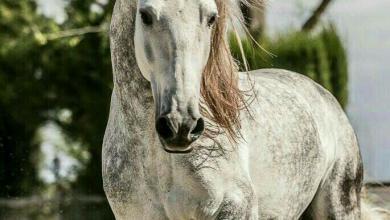 Pferd Zur Verfügung 390x220 - Pferd Zur Verfügung