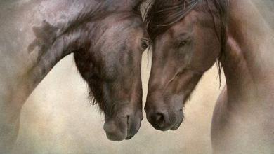 Pferd Zur Verfügung Kostenlos Downloaden 390x220 - Pferd Zur Verfügung Kostenlos Downloaden